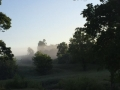 Morning fog on the farm
